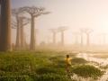 Материнский лес, Мадагаскар